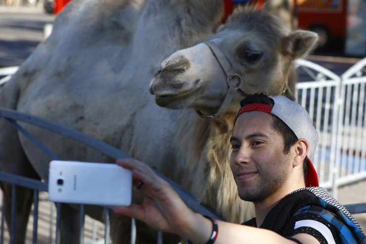 A visitor takes a selfie with a camel during a circus performance at Bastille square in Paris in this Sept. 7, 2016. France's environment minister announced Tuesday, a gradual ban in the coming years on the use of wild animals in travelling circuses and on keeping in captivity dolphins and killer whales. AP-Yonhap