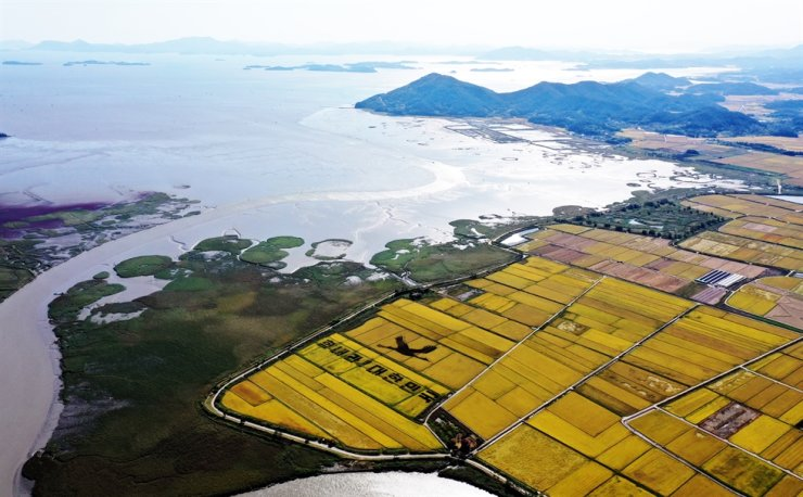 Suncheon Bay Ecological Park, Monday / Yonhap