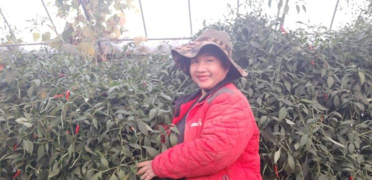 An Yu-jeong, who hails from Thailand, poses with Thai pepper plants at the Sawadi Farm in Taean, South Chungcheong Province. / Courtesy of An Yu-jeong