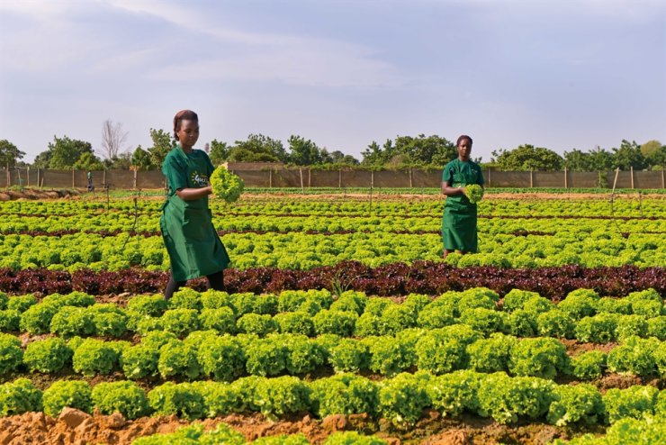 Agriculture is one of the sectors selected to boost Angola's economy after COVID-19 pandemic. / Courtesy of Angola Infotour