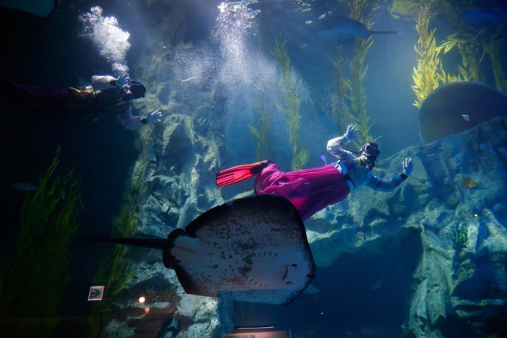 Divers in Korean traditional costumes 'Hanbok' perform during an event to celebrate New Year amid the coronavirus disease (COVID-19) pandemic at an aquarium in Seoul, Korea, Sunday. / REUTERS-Yonhap