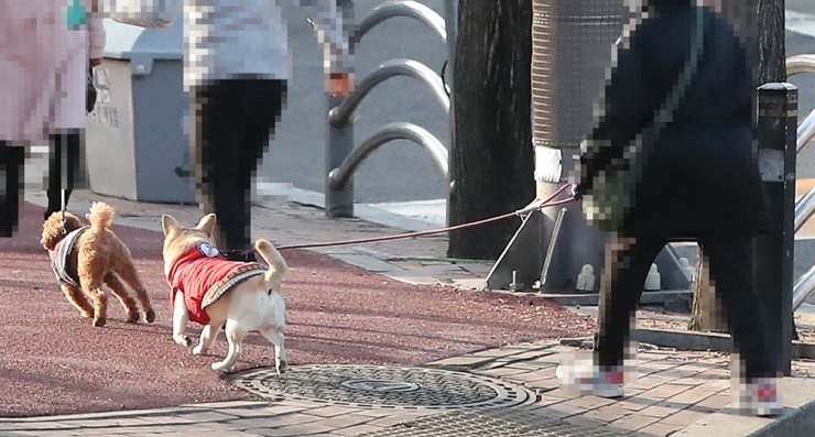 Citizens take a walk with their dogs on a street in Jung-gu, Seoul, Sunday. / Yonhap