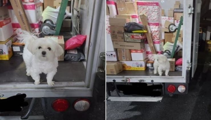 A Maltese named Gyeongtae is left inside a box truck by his owner who delivers parcels. The deliveryman could not find any other solution for the separation anxiety suffered by the dog, which was abandoned by its former owner. Screen capture from Naver blog