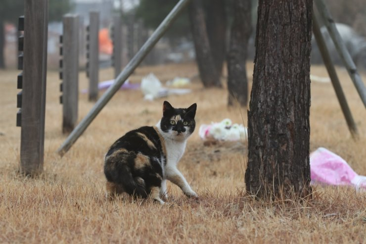 The Seoul city government said it has reported its first COVID-19 case on pet ― a female, 4-to-5 years old cat that was living with a family infected with the disease. Yonhap