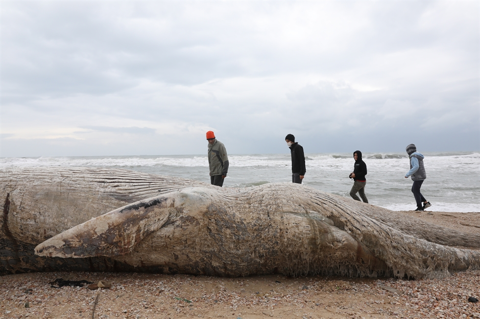 People stand near the body of a dead whale after it washed ashore from the Mediterranean near Nitzanim, Israel, Feb. 19, 2021. Reuters