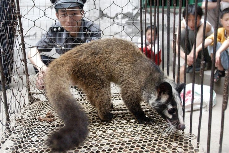 China is cracking down on the wildlife trade. AFP