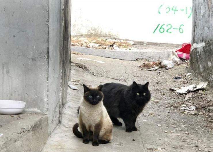 Three people have been accused of displaying videos and photos of them brutally abusing animals on a member-only online chatroom, the police said, Monday. The two cats in this photo are unrelated to the story. Korea Times file