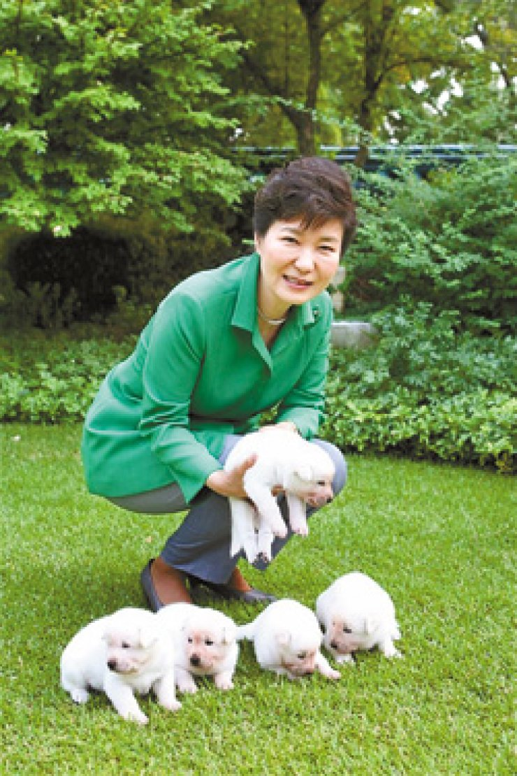 Former President Park Geun-hye plays with her pet Jindo dogs at the residence in Cheong Wa Dae in September last year. / Korea Times file
