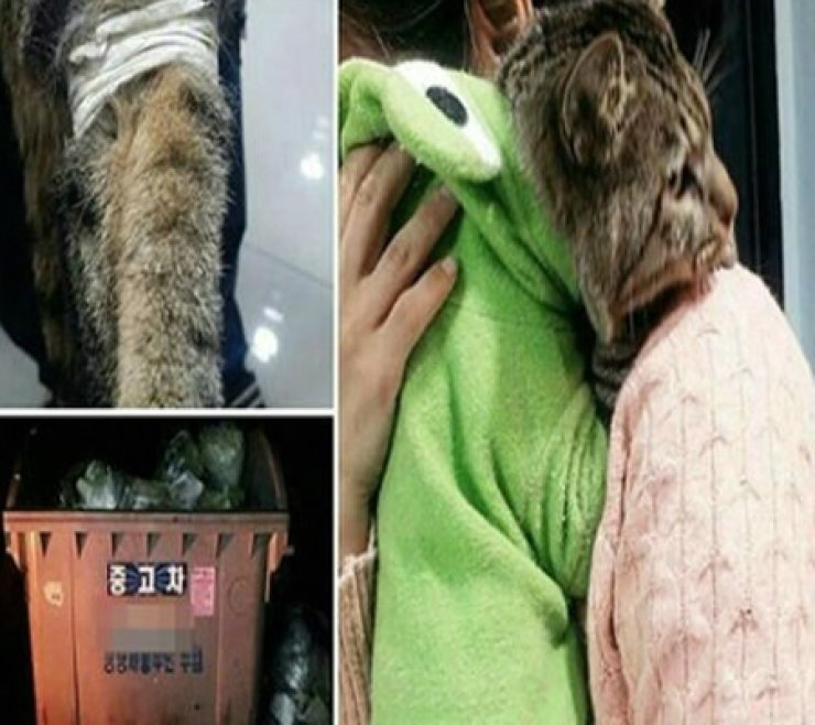 An injured cat with its legs tied was found in a garbage can near a park in Seobuk-gu district in Cheonan city, South Chungcheong Province, on Oct. 15. / Yonhap