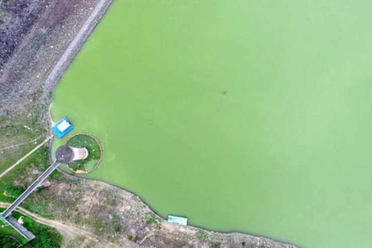 Sayeong Lake, in Ulju County, Ulsan, appears green due to algal blooms on Tuesday afternoon. / Yonhap