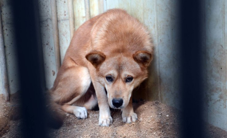 Al Arabiya said that Egypt, dealing with an excessive number of stray dogs, is looking to export them to Korea. / Korea Times file