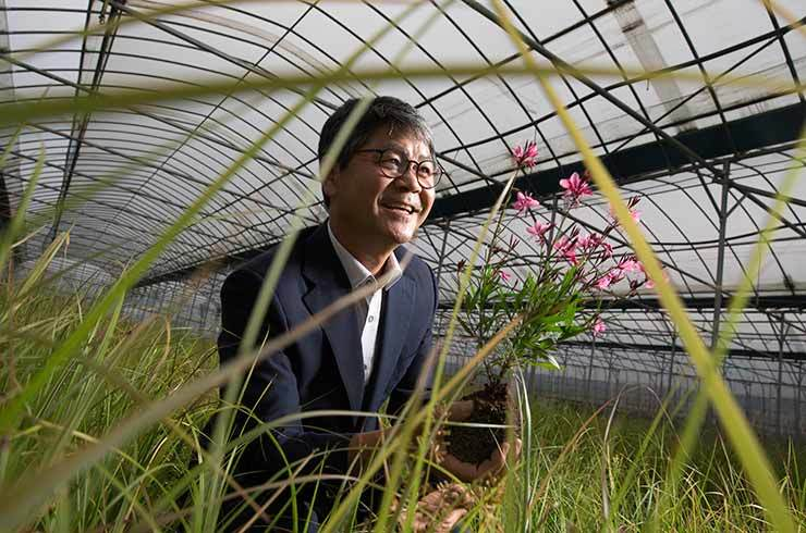 Park Kong-young, CEO of Uriseed Group, poses with his Gaura lindheimeri variation / Korea Times photo by Choi Won-suk
