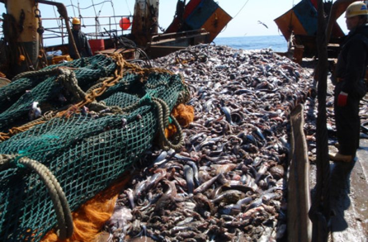 Fish are piled on the deck of a foreign vessel off the coast of New Zealand. Indonesians working on Korean-owned trawlers claim that serious labor abuses occur at sea. / Courtesy of New Zealand Ministry of Fisheries