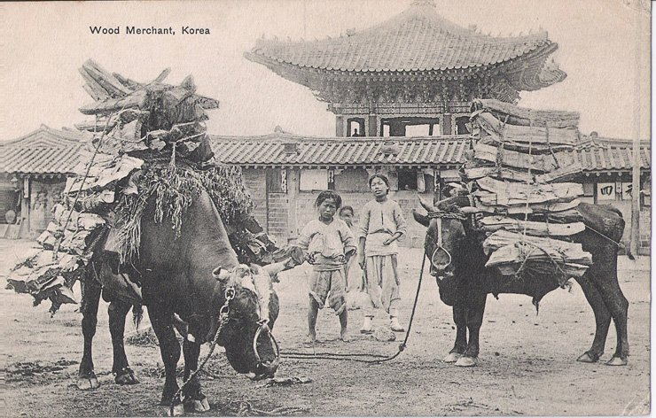 Children pose with oxen carrying wood in Seoul circa 1908. / Courtesy of Robert Neff Collection
