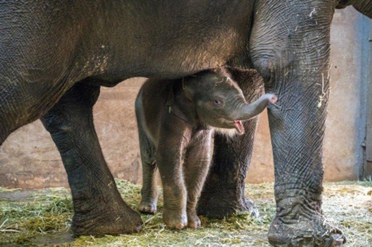 Baby elephant Kori / Courtesy of  Seoul Children's Grand Park