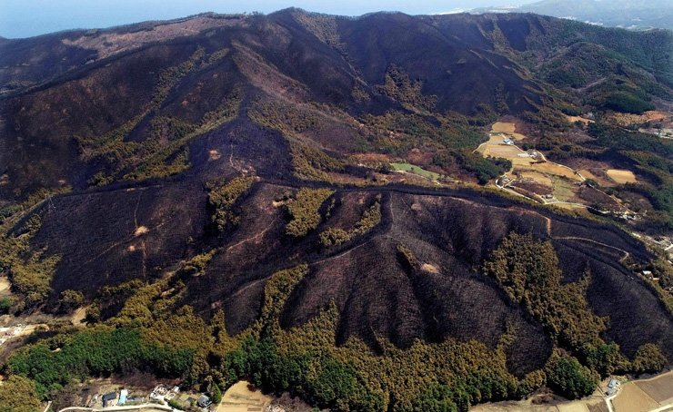 A forest in Gangneung, Gangwon Province, burns down in this April 7 photo. A wildfire devastated over 2,000 hectares of mountainous terrain in five regions of the province, raising concerns over possible flooding and landslides in the upcoming summer rainy season. /Korea Times file