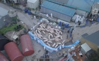 Fourth African swine fever case confirmed in Korea