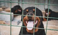 Korea implements tougher rules on animal abuse, pet owners