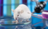 More than 3.7 million animals used in experiments last year