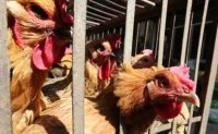 China reports H5N1 bird flu outbreak in Hunan province