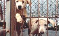 Animal abandonment increasing in Korea