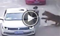 Tiger kills woman at Chinese wildlife park