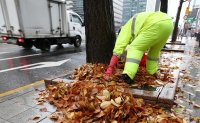 Cleaning fallen leaves