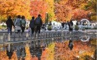 Fall colors peak across Korea [PHOTOS]