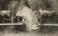 Roll up, roll up: The circus comes to town in 1920 (part one)