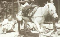 No shoo-in: Ponies put bite on 19th century blacksmiths