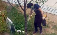 Court upholds six-month prison term for cat killer