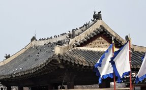 'Flying rats' ruffle feathers in modern and old Seoul