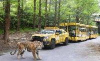 Everland's new safari ride