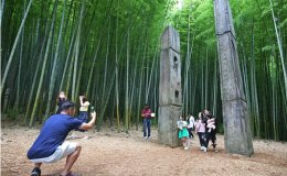 Forests become popular destinations amid pandemic