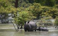 World wildlife populations dip 68% since 1970
