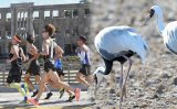 Cheorwon theme park threatens Korea's largest crane habitat: activists