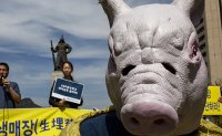 Animal groups: 'Infected pigs were buried alive, splattering blood'
