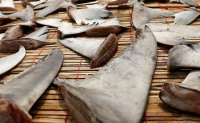 Activists target seven Seoul hotels for serving controversial shark fin