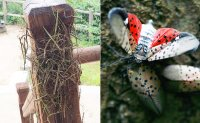 Insect alerts: how climate change broke Korea's natural balance