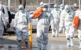 South Korea confirms this year's first case of avian flu in domestic poultry