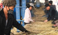 North Korea ranks worst in undernourishment in Asia-Pacific region
