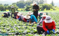 Seoul to temporarily ease rules on foreign seasonal workers