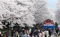 Changwon festivals canceled, visitors asked to stay away