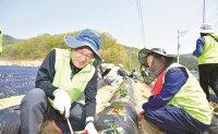 Volunteer farming