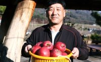 Mungyeong farmer grows premium apples with honey-sweet flavors