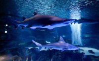 COEX Aquarium aims to become must-visit attraction for foreigners