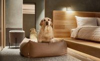 Pet-friendly hotels: where to travel with your pets