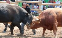 Bullfighting - tradition or animal abuse?