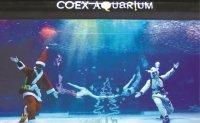 COEX Aquarium holds underwater shows for Christmas