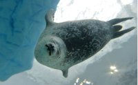 Arctic animals to shift feeding habits for survival
